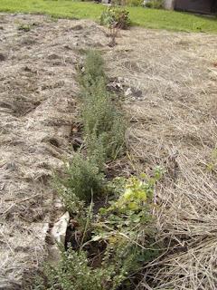 Providence Acres No Till 39 Lasagna 39 Gardening
