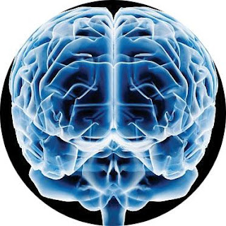 cerebro.jpg (372×372)