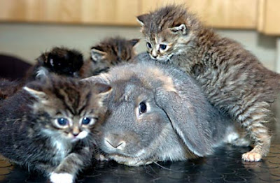 Summer the rabbit and the kittens