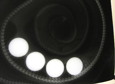 An x-ray showing four golf balls stuck inside a carpet python.