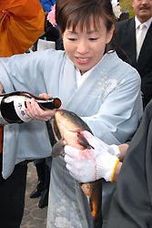 Sake is poured into the mouth of a carp