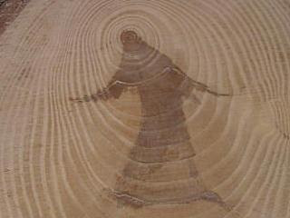 A Jesus-like figure with its arms outstretched in a tree.