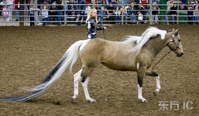 The Longest Tail on a Horse