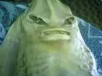 Weird Creature