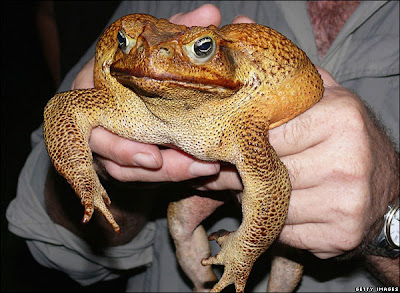 Monster Toad