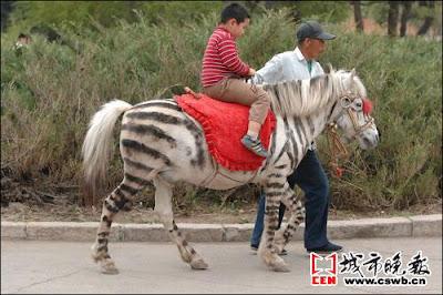 Fake Zebra