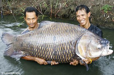 Largest Carp