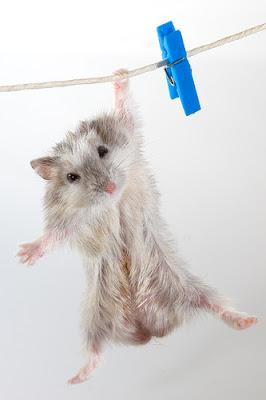 Cutest hamster shot