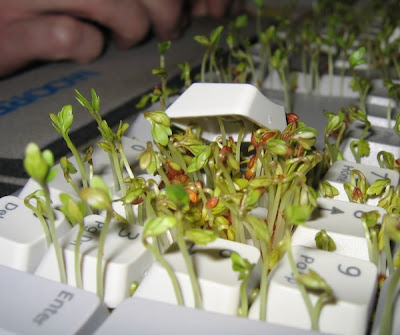 Plants growing on keyboard
