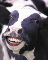 A happy cow