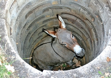 Donkey trapped in a well