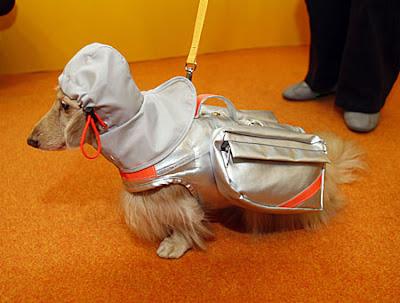 A dog wearing a rescue jacket