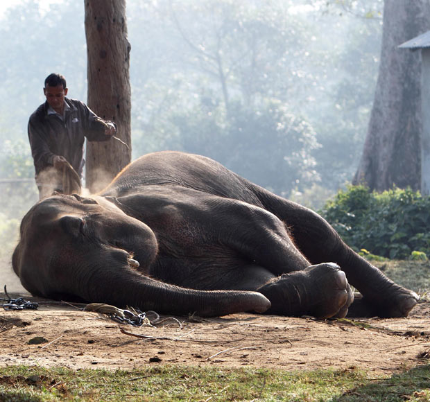 Picture of the Day -  The elephant