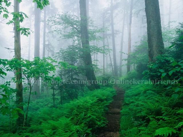 Appalachian Trail Along Foggy Ridge