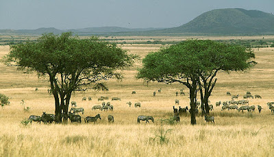 The savannah of eastern Africa
