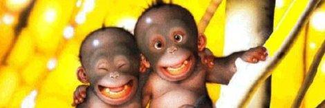 amigos felices