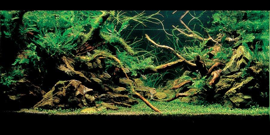 Famous Nature Style Aquarium 900 x 450 · 135 kB · jpeg