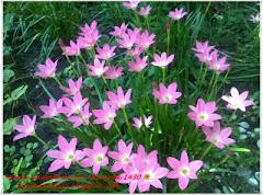 Jambangan Bunga - Seri