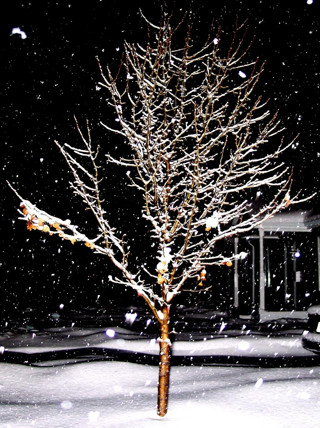 [snowtree.JPG]