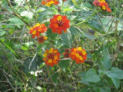 Wildflowers, Monterrey