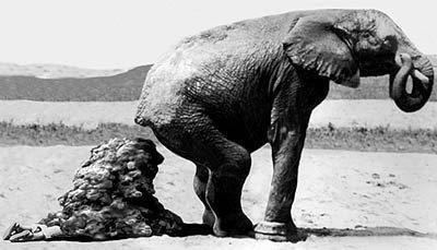 Mierda elefante y becario.