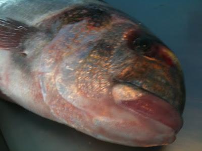 Τα ψάρια για την υγεία των γυναικών