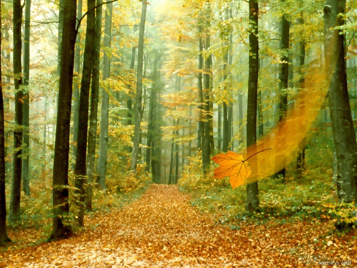 forests nature2B 3  - ~*Pic Of The Day 18 Oct 09*~