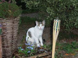 Onze kat: Chester