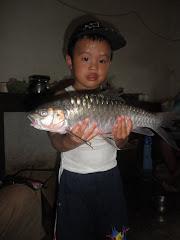 Ikan Jurung