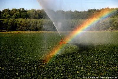rainbow regnbåge bevattning åker fält vatten vattna vattnar skåne foto anders n
