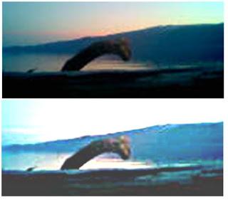 selma lake monster