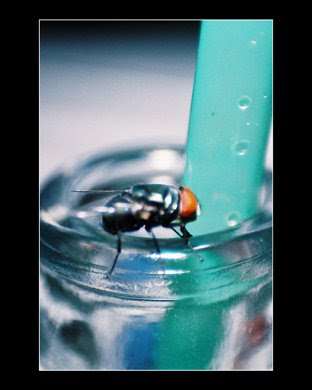 Fly on a soda bottle