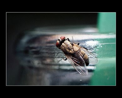 Fly atop a soda bottle
