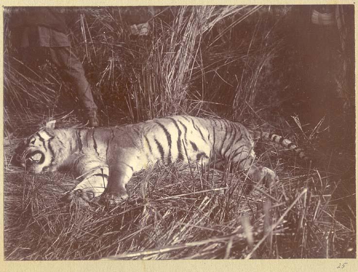 [King+George+V+Hunting+in+Nepal+in+1911+(10).jpg]