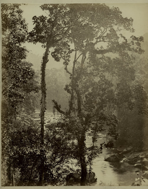 c.1890%2527s+PHOTO+INDIA+CEYLON+TALL+TREES+BY+RIVER