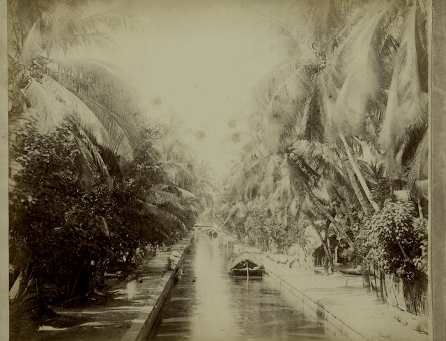 c.1890%2527s+PHOTO+INDIA+CEYLON+CANAL+LINED+WITH+PALMS