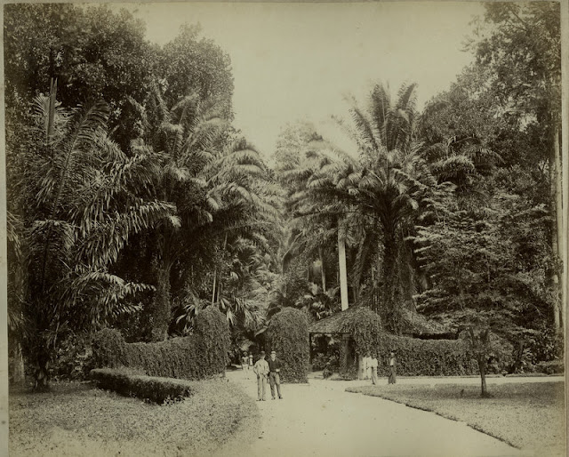 c1890%2527s+PHOTO+INDIA+CEYLON+MEN+IN+BOTANICAL+GARDEN
