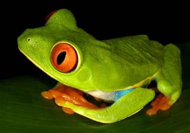 [041014_frogs_hmed_2p.hmedium]
