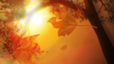 Autumn-Leaves-أوراق-الخريف-اليابسة