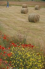 Pacas de hierba