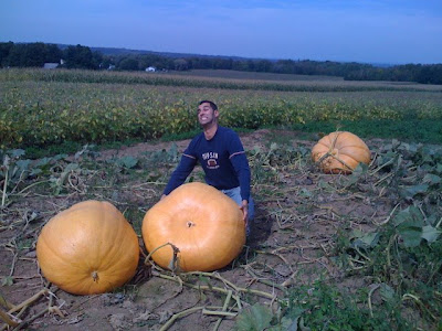 Seventy Pumpkin Pies!!
