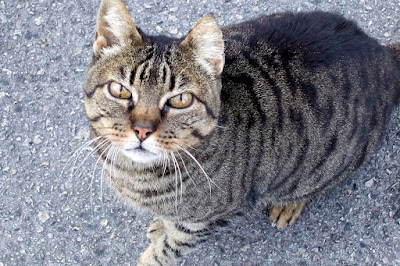 tabby cat in Marbella, Spain