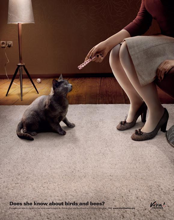 Viva! | All Social Ads