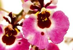 My Orchid ... 蘭花坊