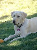 IZZY (The Pup)