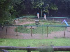 Cubs pen flooding