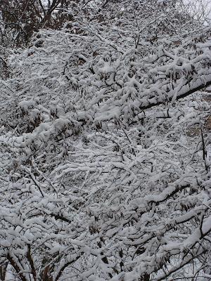 Зима 2010