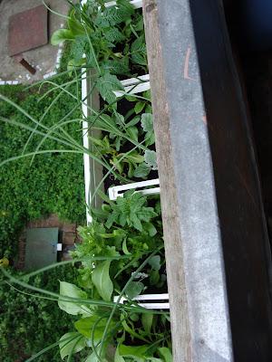 Цветы на балконах и в заоконных ящиках