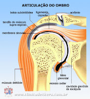 Articulação ombro