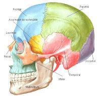Articulações do crânio